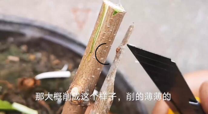 果木之顶目接牙法