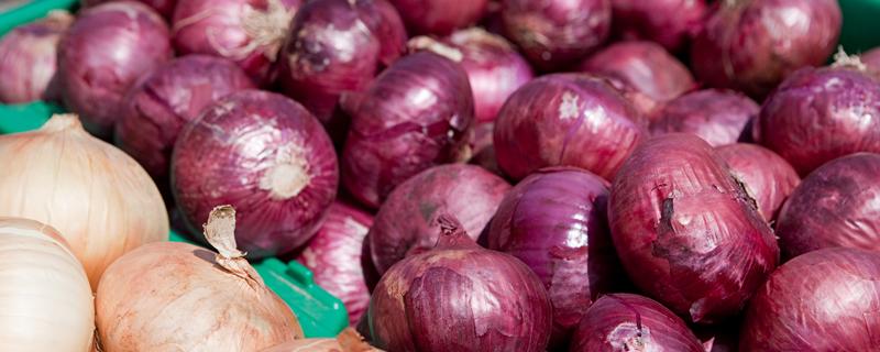 红葱籽紫皮洋葱正确种植方法