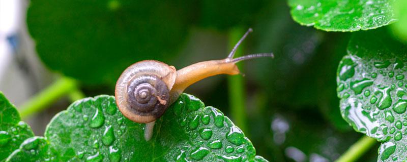 蜗牛怎么养才不会死