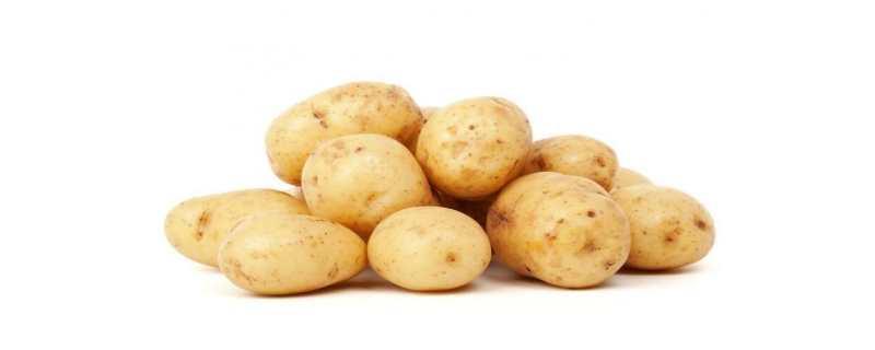 马铃薯是土豆吗